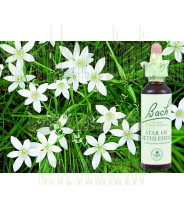 BACH STAR OF BETHLEHEM 20ML